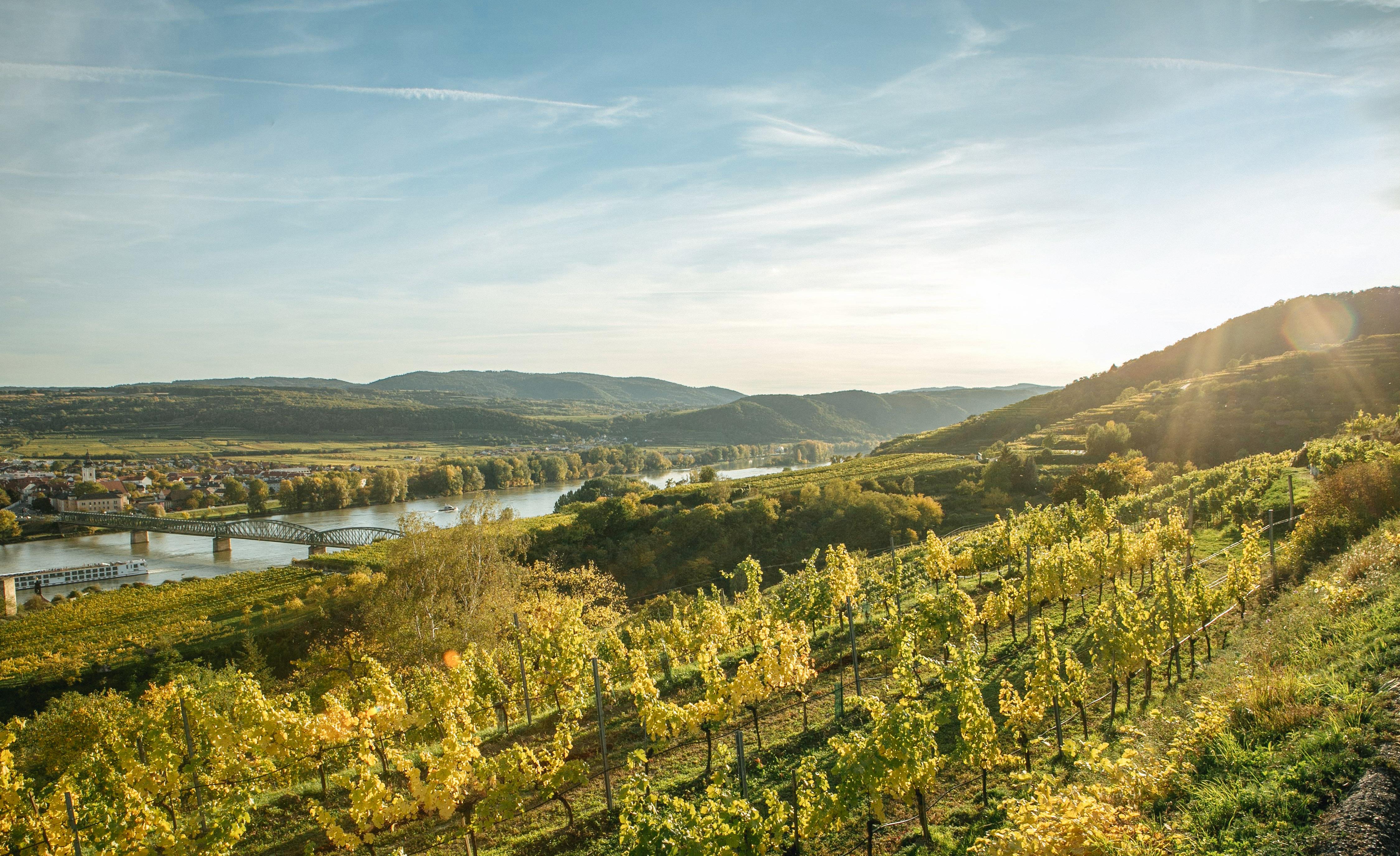 buy popular 2bc19 b718b Weingut Salomon Undhof I Kremstal - Oesterreich | Salomon Wines