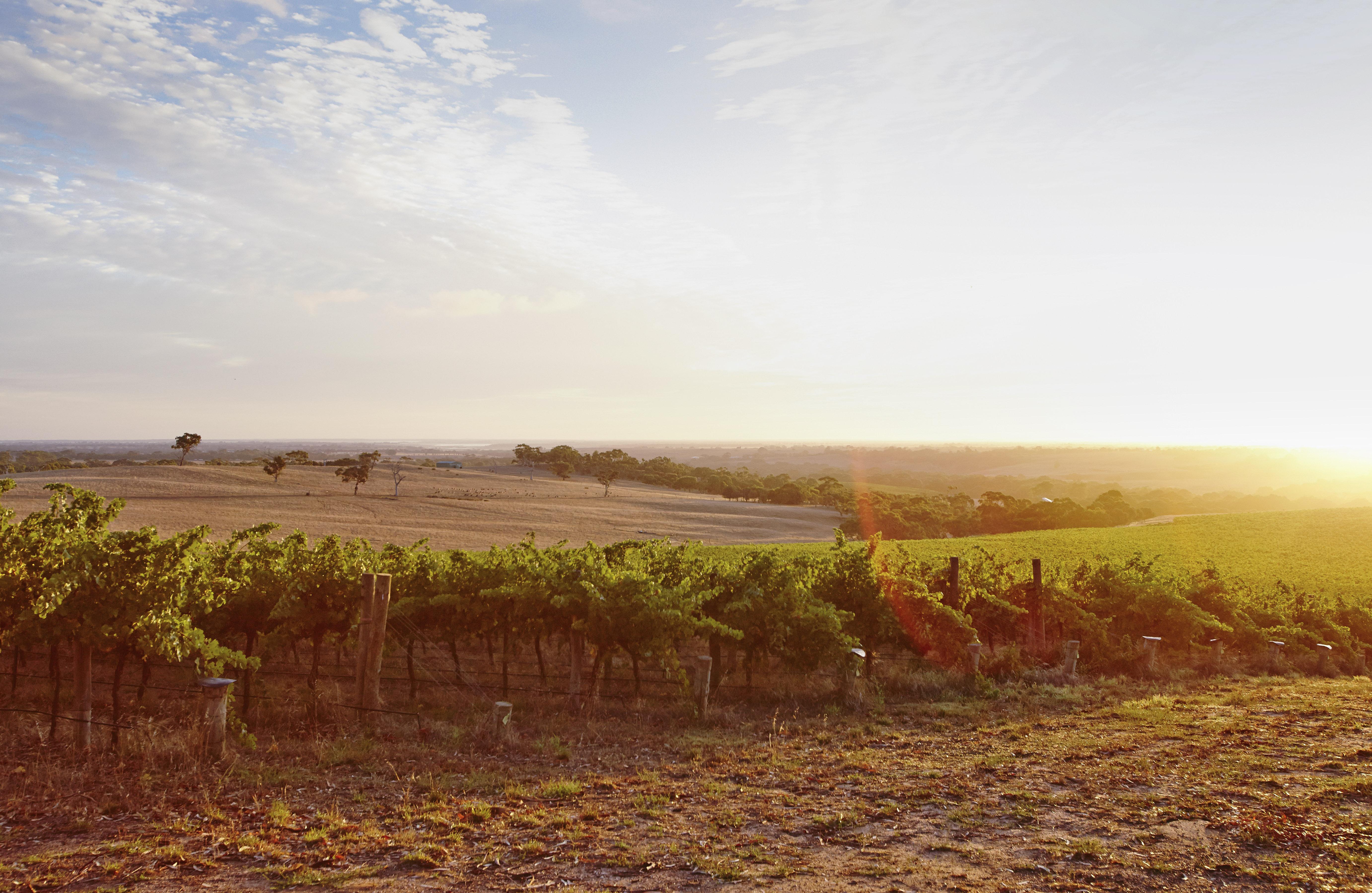 Salomon Estate, Finnis River | Salomon Wines